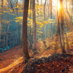 beautiful-autumn-forest-in-crimean-mountains-at-PNHK4L4